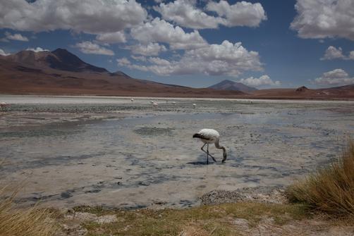 Bolivia Car Hire