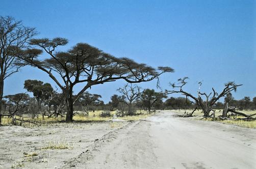 Botswana Car Hire